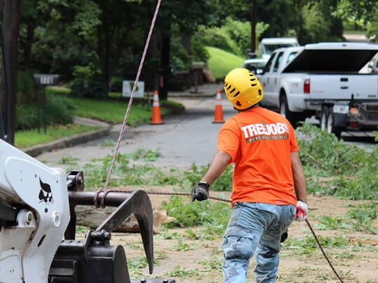 Arborist Consultations-Santa Maria Tree Trimming and Stump Grinding Services-We Offer Tree Trimming Services, Tree Removal, Tree Pruning, Tree Cutting, Residential and Commercial Tree Trimming Services, Storm Damage, Emergency Tree Removal, Land Clearing, Tree Companies, Tree Care Service, Stump Grinding, and we're the Best Tree Trimming Company Near You Guaranteed!