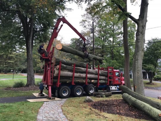 Commercial Tree Services-Santa Maria Tree Trimming and Stump Grinding Services-We Offer Tree Trimming Services, Tree Removal, Tree Pruning, Tree Cutting, Residential and Commercial Tree Trimming Services, Storm Damage, Emergency Tree Removal, Land Clearing, Tree Companies, Tree Care Service, Stump Grinding, and we're the Best Tree Trimming Company Near You Guaranteed!