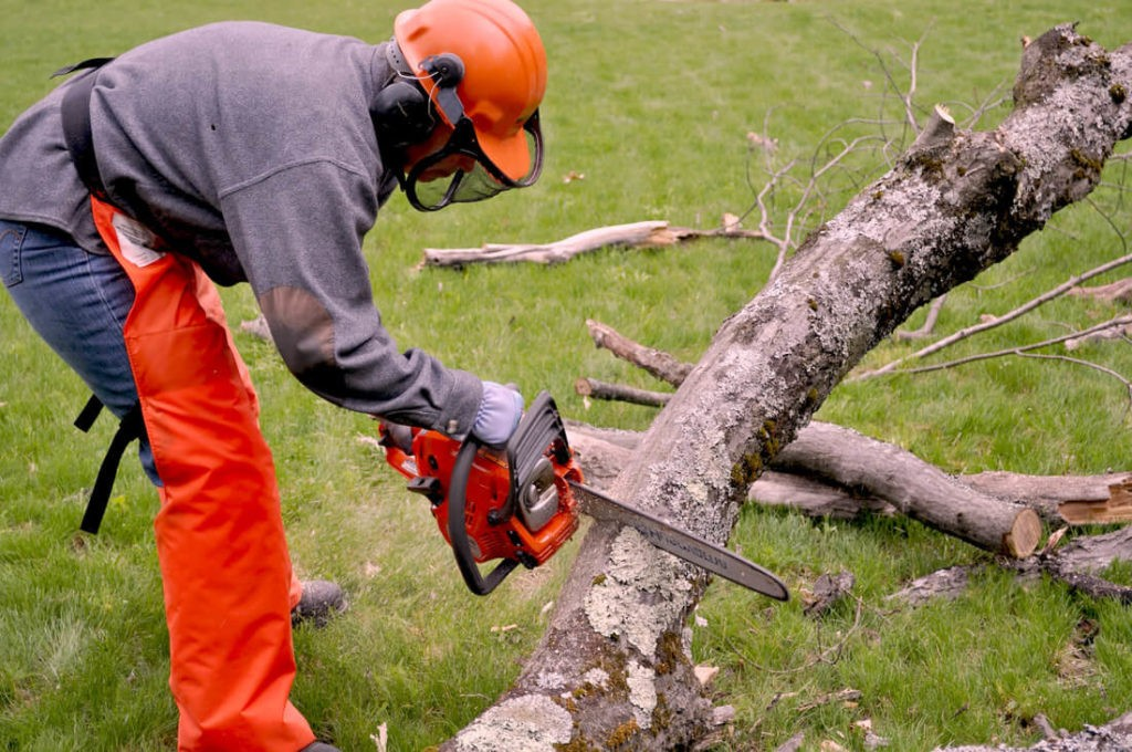 Emergency Tree Removal-Santa Maria Tree Trimming and Stump Grinding Services-We Offer Tree Trimming Services, Tree Removal, Tree Pruning, Tree Cutting, Residential and Commercial Tree Trimming Services, Storm Damage, Emergency Tree Removal, Land Clearing, Tree Companies, Tree Care Service, Stump Grinding, and we're the Best Tree Trimming Company Near You Guaranteed!