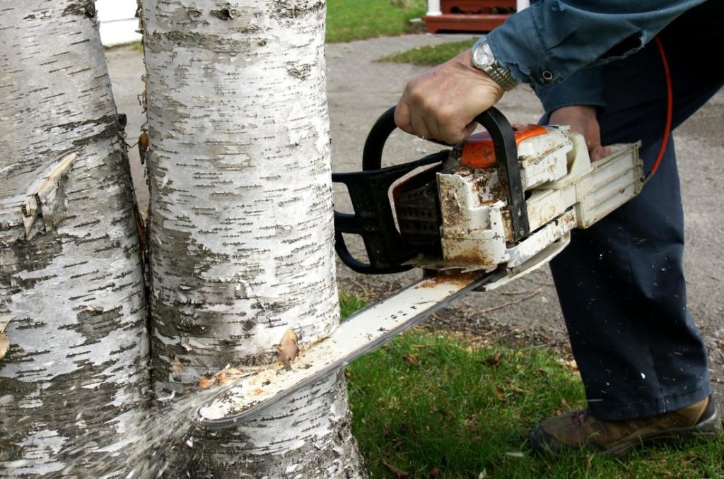 Santa Maria Tree Trimming and Stump Grinding Services Header Image-We Offer Tree Trimming Services, Tree Removal, Tree Pruning, Tree Cutting, Residential and Commercial Tree Trimming Services, Storm Damage, Emergency Tree Removal, Land Clearing, Tree Companies, Tree Care Service, Stump Grinding, and we're the Best Tree Trimming Company Near You Guaranteed!