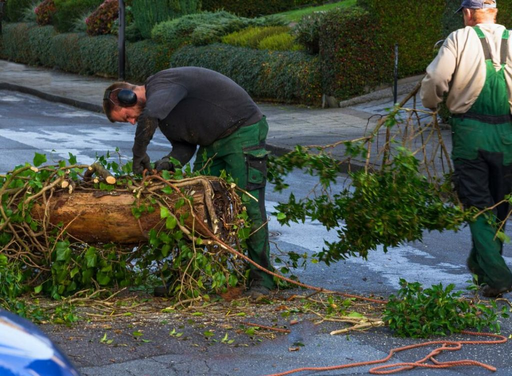 Services-Santa Maria Tree Trimming and Stump Grinding Services-We Offer Tree Trimming Services, Tree Removal, Tree Pruning, Tree Cutting, Residential and Commercial Tree Trimming Services, Storm Damage, Emergency Tree Removal, Land Clearing, Tree Companies, Tree Care Service, Stump Grinding, and we're the Best Tree Trimming Company Near You Guaranteed!