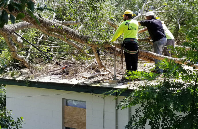 Storm Damage-Santa Maria Tree Trimming and Stump Grinding Services-We Offer Tree Trimming Services, Tree Removal, Tree Pruning, Tree Cutting, Residential and Commercial Tree Trimming Services, Storm Damage, Emergency Tree Removal, Land Clearing, Tree Companies, Tree Care Service, Stump Grinding, and we're the Best Tree Trimming Company Near You Guaranteed!