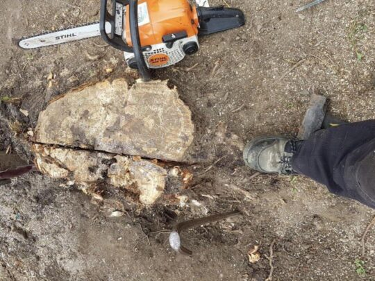 Stump Removal-Santa Maria Tree Trimming and Stump Grinding Services-We Offer Tree Trimming Services, Tree Removal, Tree Pruning, Tree Cutting, Residential and Commercial Tree Trimming Services, Storm Damage, Emergency Tree Removal, Land Clearing, Tree Companies, Tree Care Service, Stump Grinding, and we're the Best Tree Trimming Company Near You Guaranteed!