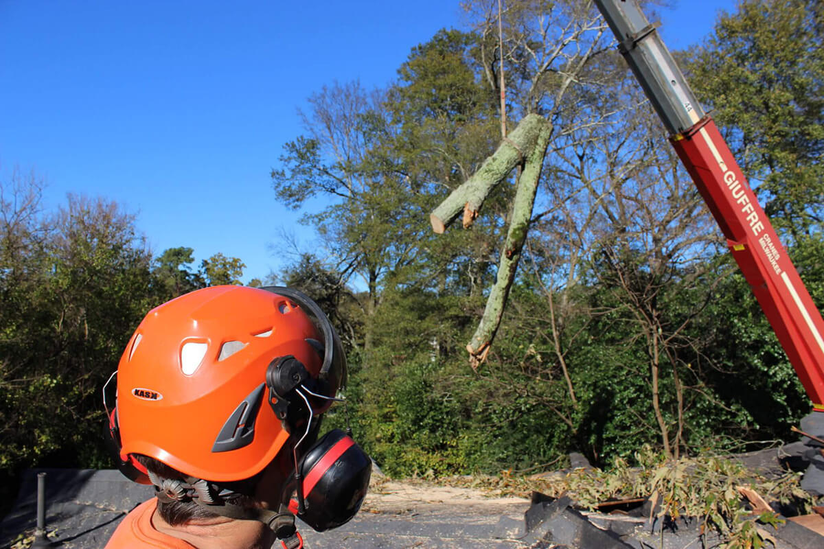 Tree Cutting-Santa Maria Tree Trimming and Stump Grinding Services-We Offer Tree Trimming Services, Tree Removal, Tree Pruning, Tree Cutting, Residential and Commercial Tree Trimming Services, Storm Damage, Emergency Tree Removal, Land Clearing, Tree Companies, Tree Care Service, Stump Grinding, and we're the Best Tree Trimming Company Near You Guaranteed!