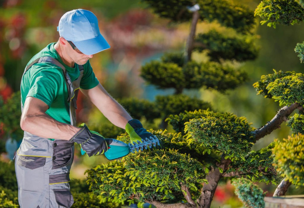 Tree Pruning-Santa Maria Tree Trimming and Stump Grinding Services-We Offer Tree Trimming Services, Tree Removal, Tree Pruning, Tree Cutting, Residential and Commercial Tree Trimming Services, Storm Damage, Emergency Tree Removal, Land Clearing, Tree Companies, Tree Care Service, Stump Grinding, and we're the Best Tree Trimming Company Near You Guaranteed!