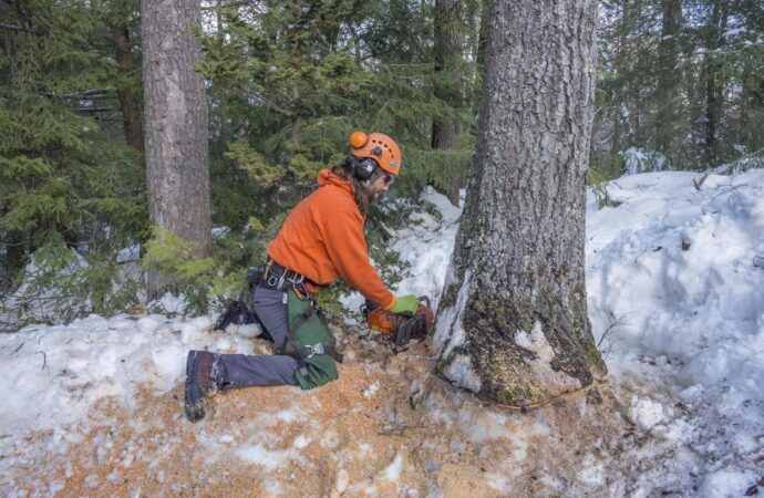 Tree Removal-Santa Maria Tree Trimming and Stump Grinding Services-We Offer Tree Trimming Services, Tree Removal, Tree Pruning, Tree Cutting, Residential and Commercial Tree Trimming Services, Storm Damage, Emergency Tree Removal, Land Clearing, Tree Companies, Tree Care Service, Stump Grinding, and we're the Best Tree Trimming Company Near You Guaranteed!