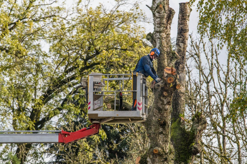 Tree Trimming-Santa Maria Tree Trimming and Stump Grinding Services-We Offer Tree Trimming Services, Tree Removal, Tree Pruning, Tree Cutting, Residential and Commercial Tree Trimming Services, Storm Damage, Emergency Tree Removal, Land Clearing, Tree Companies, Tree Care Service, Stump Grinding, and we're the Best Tree Trimming Company Near You Guaranteed!