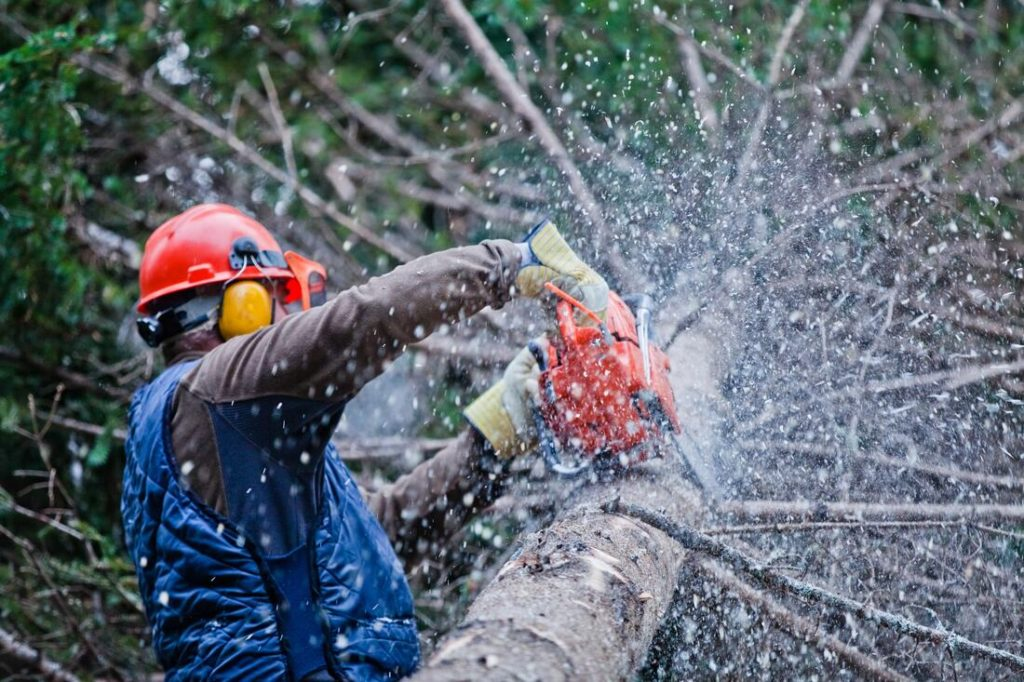 Guadalupe-Santa Maria Tree Trimming and Stump Grinding Services-We Offer Tree Trimming Services, Tree Removal, Tree Pruning, Tree Cutting, Residential and Commercial Tree Trimming Services, Storm Damage, Emergency Tree Removal, Land Clearing, Tree Companies, Tree Care Service, Stump Grinding, and we're the Best Tree Trimming Company Near You Guaranteed!