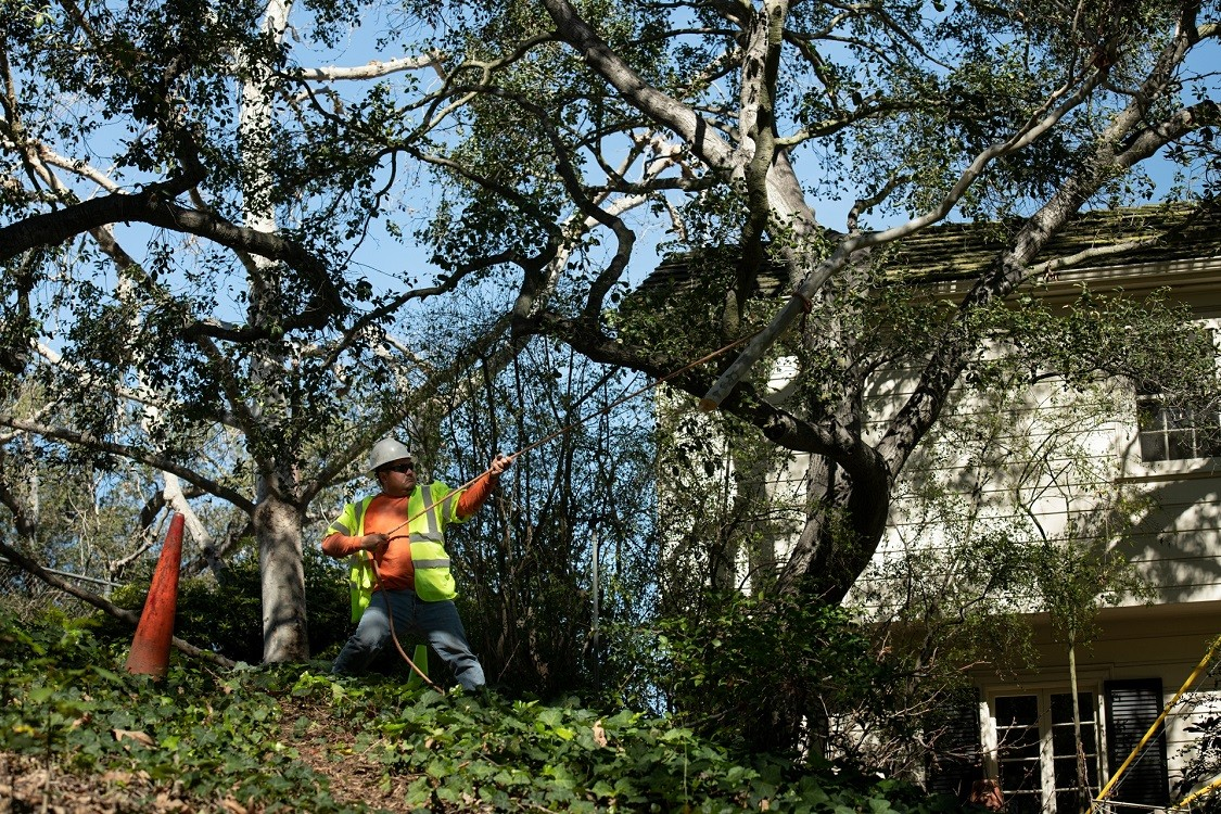 Los Alamos-Santa Maria Tree Trimming and Stump Grinding Services-We Offer Tree Trimming Services, Tree Removal, Tree Pruning, Tree Cutting, Residential and Commercial Tree Trimming Services, Storm Damage, Emergency Tree Removal, Land Clearing, Tree Companies, Tree Care Service, Stump Grinding, and we're the Best Tree Trimming Company Near You Guaranteed!
