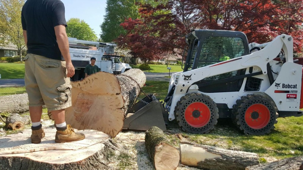 Orcutt-Santa Maria Tree Trimming and Stump Grinding Services-We Offer Tree Trimming Services, Tree Removal, Tree Pruning, Tree Cutting, Residential and Commercial Tree Trimming Services, Storm Damage, Emergency Tree Removal, Land Clearing, Tree Companies, Tree Care Service, Stump Grinding, and we're the Best Tree Trimming Company Near You Guaranteed!